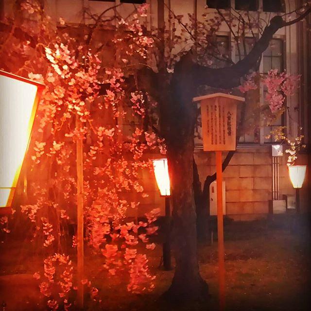 花見初めて大阪の造幣局へ桜を見に行って来ました通路は桜の木か延々と続いていて幻想的でした。あぁ、日本人に生まれて良かった~仕事に追われる毎日に心が癒されるひとときを、ありがとう出店が建ち並び、花より団子魚介の網焼き、たこ焼、イカ焼き…美味しかったな~そろそろ散ってる頃かな…はかない桜#スマイ#神戸市西区#(株)スマイ#不動産売買#不動産仲介#リフォーム