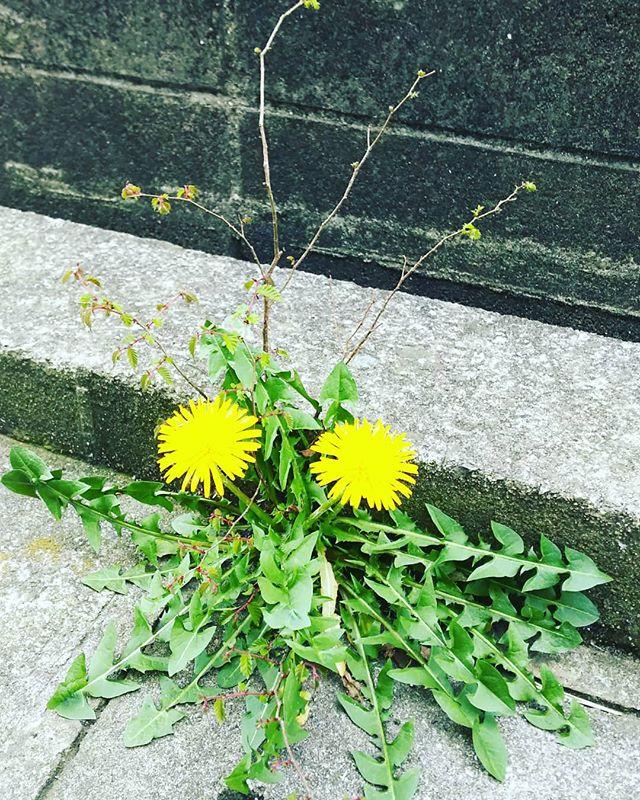 自然の活花春にしかお目見えできません。毎年同じ場所に、違った形で春の草花が顔をだします。#神戸市西区スマイ#不動産売買#不動産仲介#リフォーム